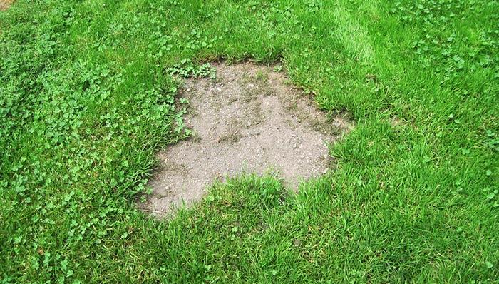 bare lawn spots