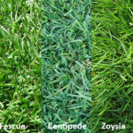 choosing correct grass type
