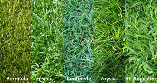 choosing correct grass type