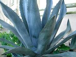 Best Low Water, Drought Tolerant Plants